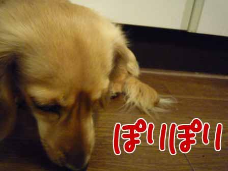 024_20110218232657.jpg