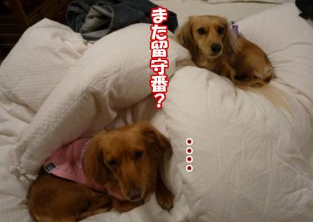 015_20101203233112.jpg