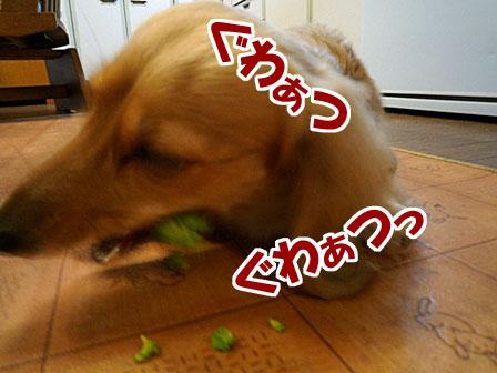 041_20120327000550.jpg