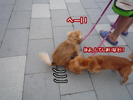 024_20110707220637.jpg