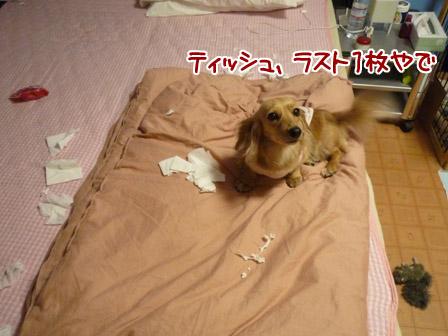 004_20120524004330.jpg
