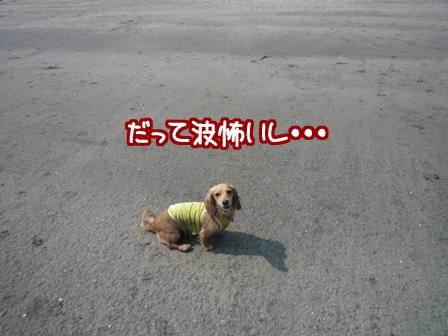 114_20110607215918.jpg