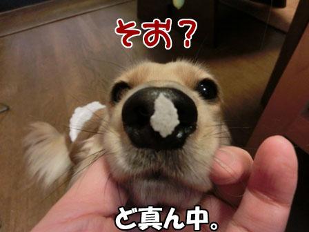 006_20121227004440.jpg