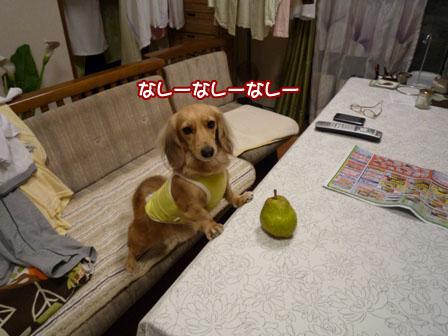 022_20111119232012.jpg