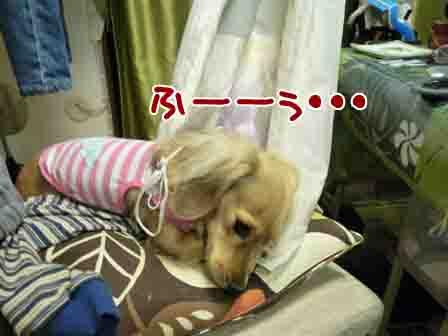 025_20110221003447.jpg