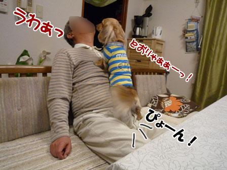 008_20111122231249.jpg