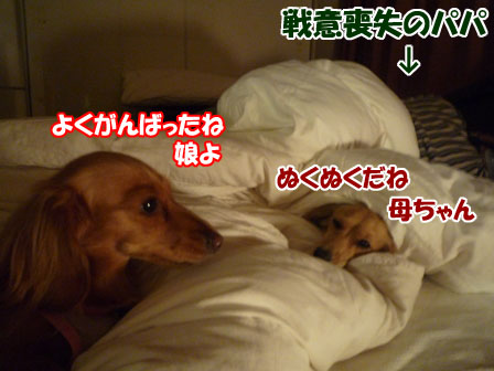 003_20101201220414.jpg
