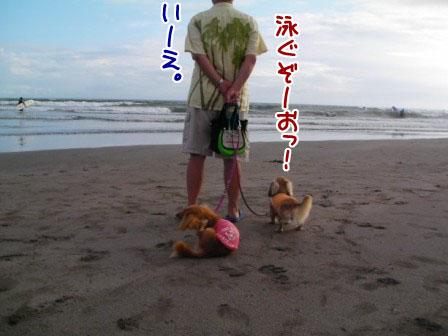 011_20110806000621.jpg