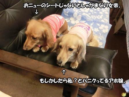 025_20121024010114.jpg