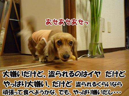 014_20120215224951.jpg