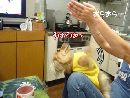 001_20111005231947.jpg