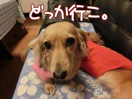 009_20121022003032.jpg