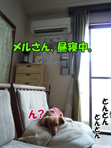 P1030221.jpg