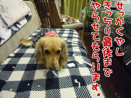 017_20110106212819.jpg