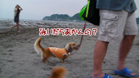 006_20110803004043.jpg