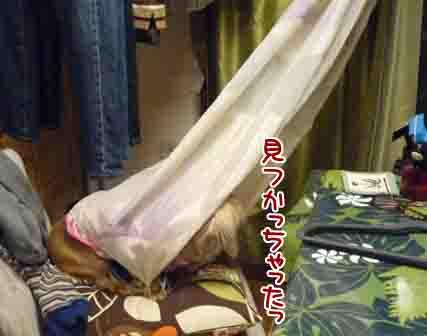 018_20110221003447.jpg