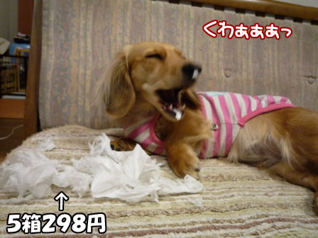 021_20110210011330.jpg