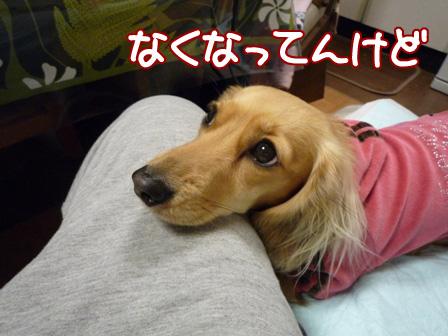 049_20110227215912.jpg