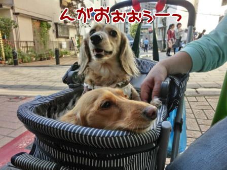091_20121022010813.jpg