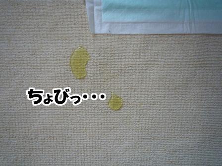 001_20110526001556.jpg