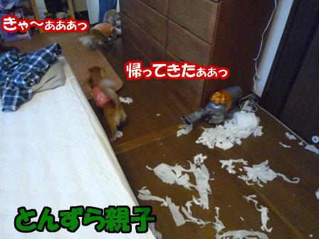 009_20101230001540.jpg