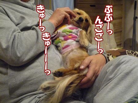 004_20101230223724.jpg