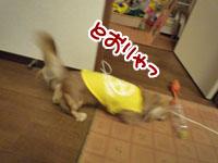 016_20111203224943.jpg