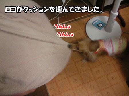 SANY0168.jpg