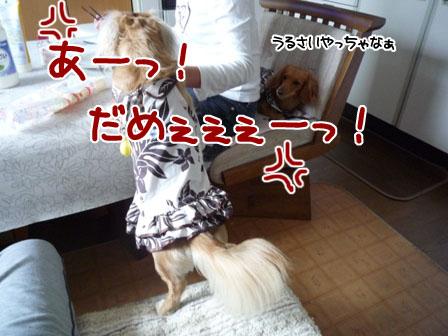 057_20111030225119.jpg