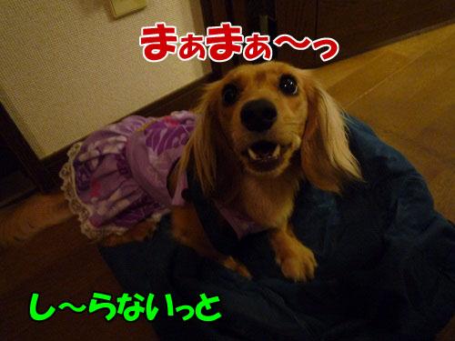 f9897a7f.jpg