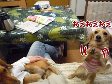 038_20110208215712.jpg