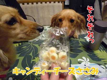 028_20110122001722.jpg