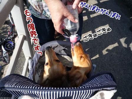 037_20111120222113.jpg