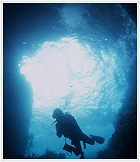 シーメイドダイビングツアーこそが洞窟