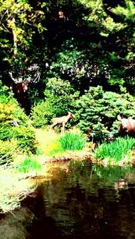 野生動物の水飲み