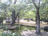 「江川 鴨島公園」(その2)。