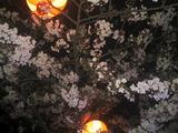 妙見山の夜桜(その3)。