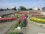 北島中央公園(その3)。