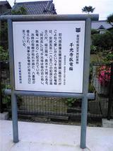 千光寺の臥竜梅(その1)。