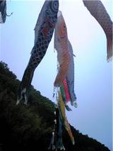 鴨島町の鯉のぼり(その3)。
