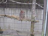 お猿さん。