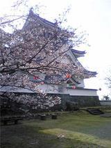 岡崎城と桜。