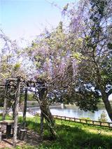上桜公園の風景(その3)。
