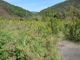 奥宮川内自然公園(その3)。