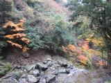 鳴滝と紅葉(その2)。