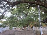 大麻比古神社の紅葉(その3)。