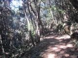 シラタマモへの道。