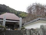 神光寺のフジ。