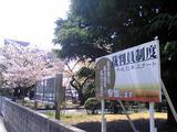 徳島家庭裁判所の桜(その3)。