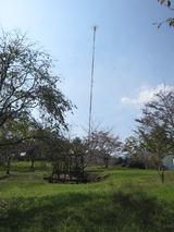丸山公園(その2)。